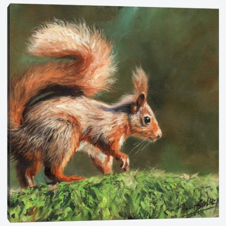 Red Squirrel On Branch Canvas Print #STG197} by David Stribbling Canvas Artwork