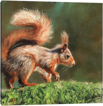Red Squirrel On Branch Canvas Art Print
