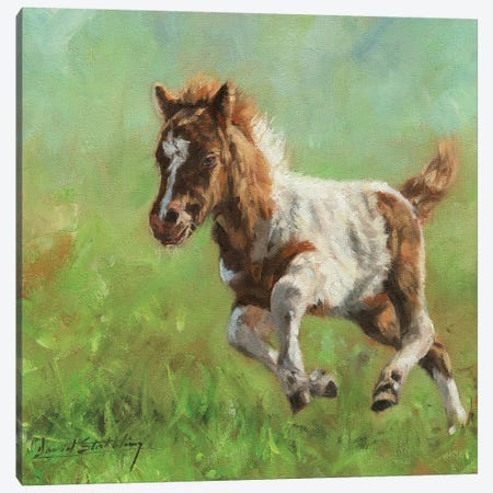 Titch Minature Horse Canvas Print #STG198} by David Stribbling Art Print