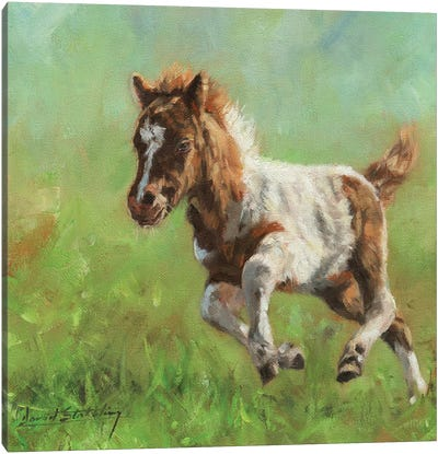 Titch Minature Horse Canvas Art Print