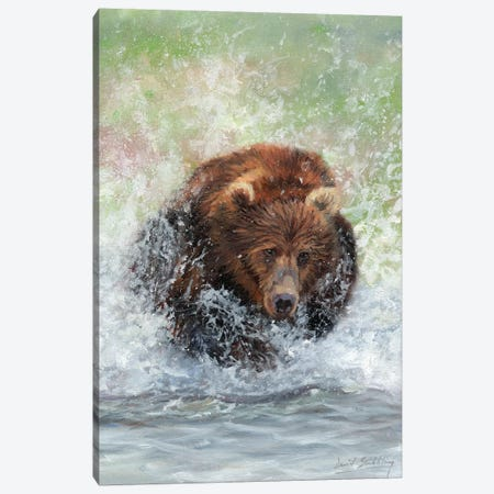 Bear Running Through Water Canvas Print #STG199} by David Stribbling Canvas Art Print