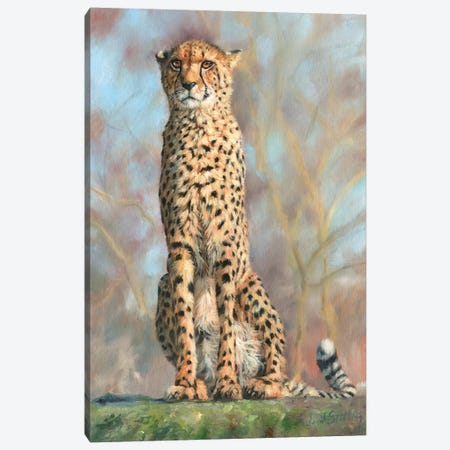 Cheetah I Canvas Print #STG19} by David Stribbling Canvas Art Print