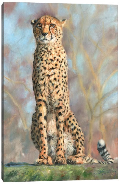 Cheetah I Canvas Art Print