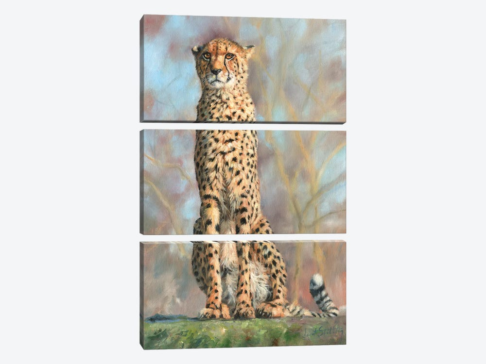Cheetah I by David Stribbling 3-piece Art Print
