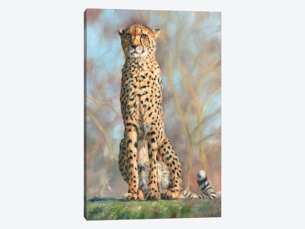 Cheetah I by David Stribbling 1-piece Canvas Art Print
