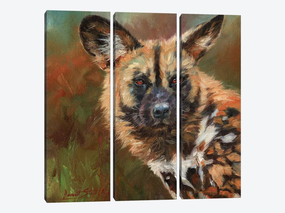 African Wild Dog Portrait by David Stribbling 3-piece Canvas Art Print