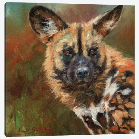 African Wild Dog Portrait Canvas Print #STG1} by David Stribbling Canvas Print