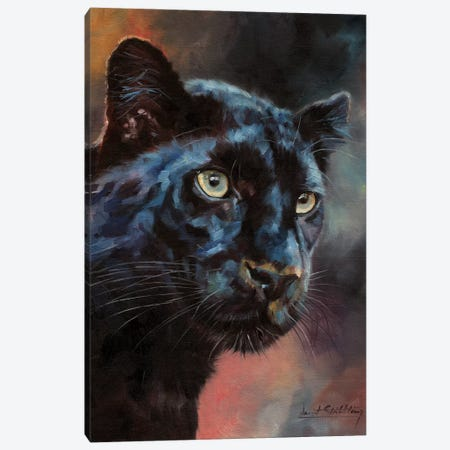 Black Panther I Canvas Print #STG200} by David Stribbling Canvas Print