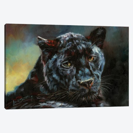 Black Panther II Canvas Print #STG201} by David Stribbling Canvas Art Print
