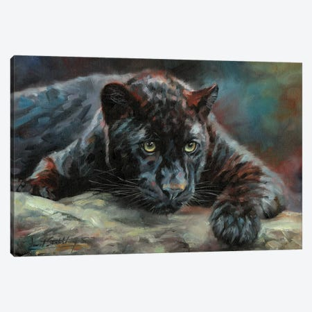 Black Panther IV Canvas Print #STG203} by David Stribbling Canvas Print