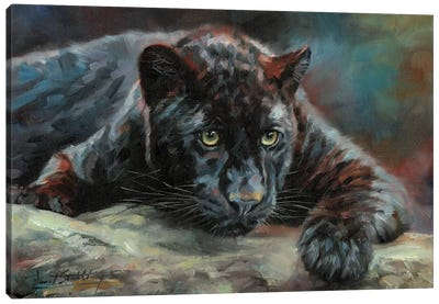 Black Panther IV by David Stribbling Canvas Art Print