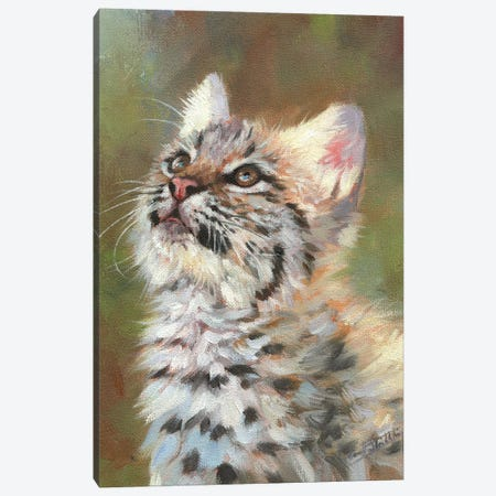 Bobcat Kitten Canvas Print #STG205} by David Stribbling Canvas Wall Art
