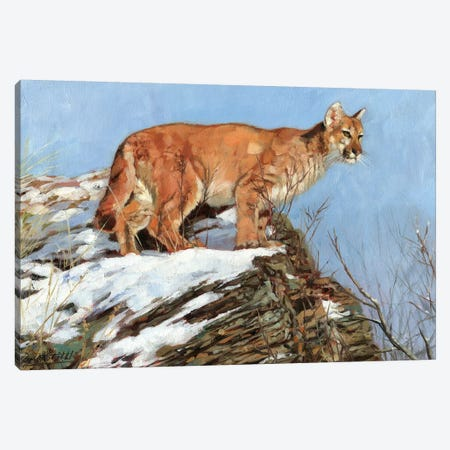 Cougar Snowy Ridge Canvas Print #STG206} by David Stribbling Canvas Artwork