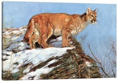 Cougar Snowy Ridge Canvas Art Print