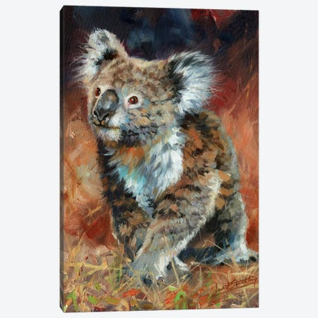 Koala Canvas Print #STG208} by David Stribbling Art Print