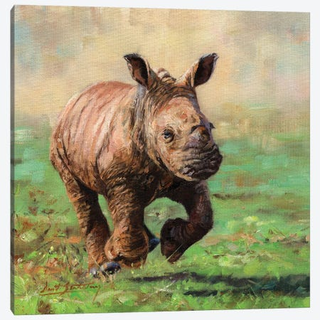 Rhino Calf Running Canvas Print #STG209} by David Stribbling Art Print