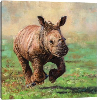 Rhino Calf Running by David Stribbling Canvas Art Print