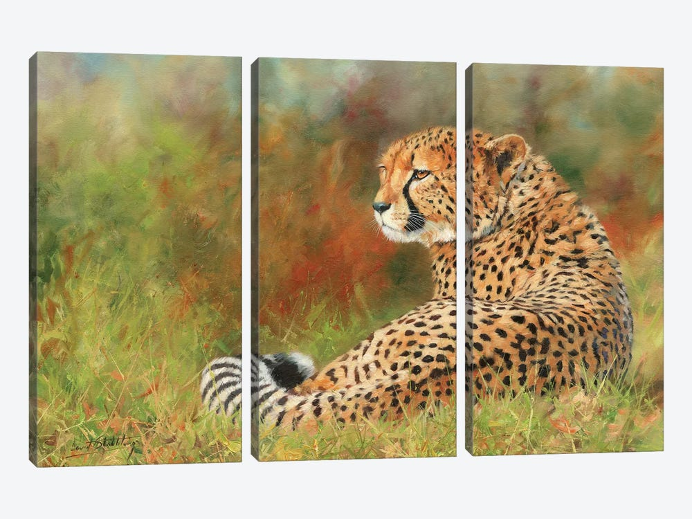 Cheetah II by David Stribbling 3-piece Canvas Print