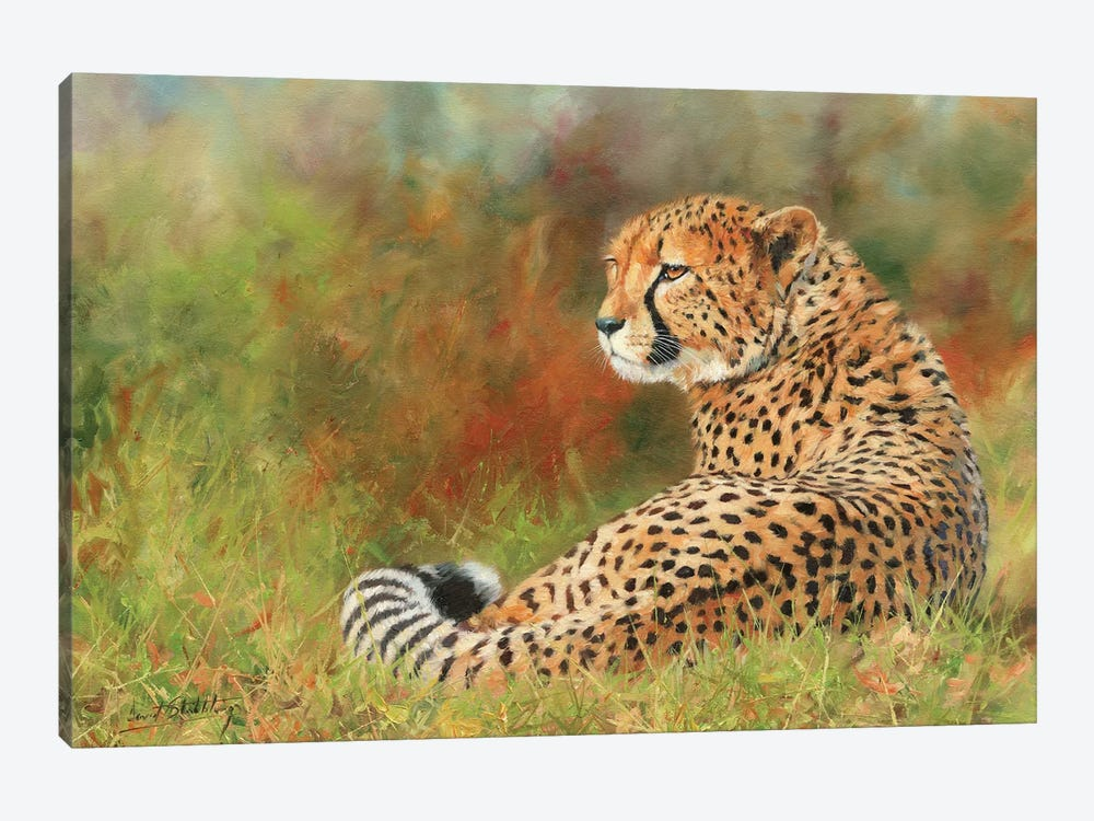 Cheetah II by David Stribbling 1-piece Canvas Art Print