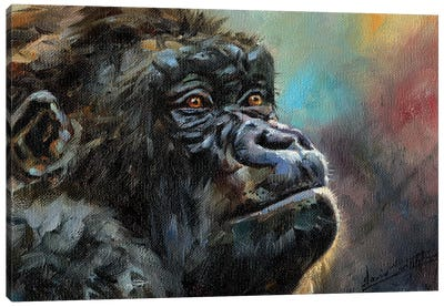 Study Of A Gorilla Canvas Art Print