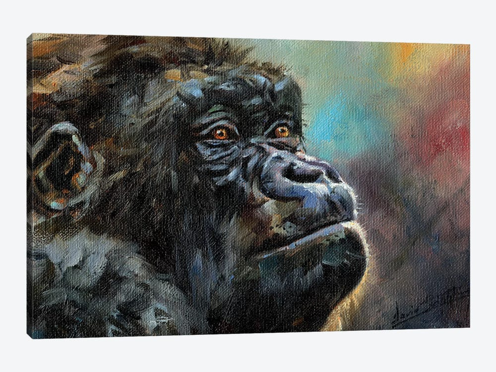 Study Of A Gorilla by David Stribbling 1-piece Canvas Print