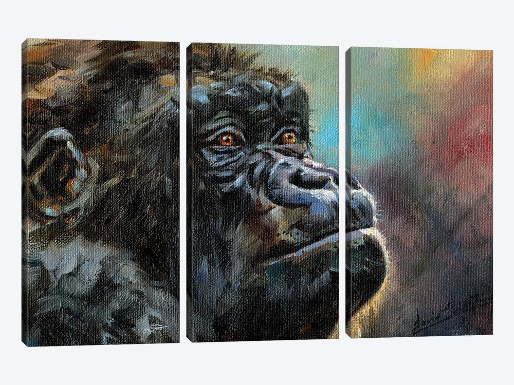 Study Of A Gorilla by David Stribbling 3-piece Canvas Print