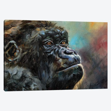 Study Of A Gorilla Canvas Print #STG210} by David Stribbling Canvas Artwork
