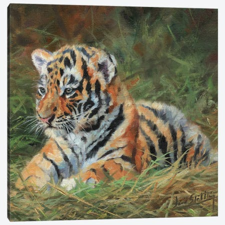 Tiger Cub Laying Down In Grass Canvas Print #STG211} by David Stribbling Canvas Artwork