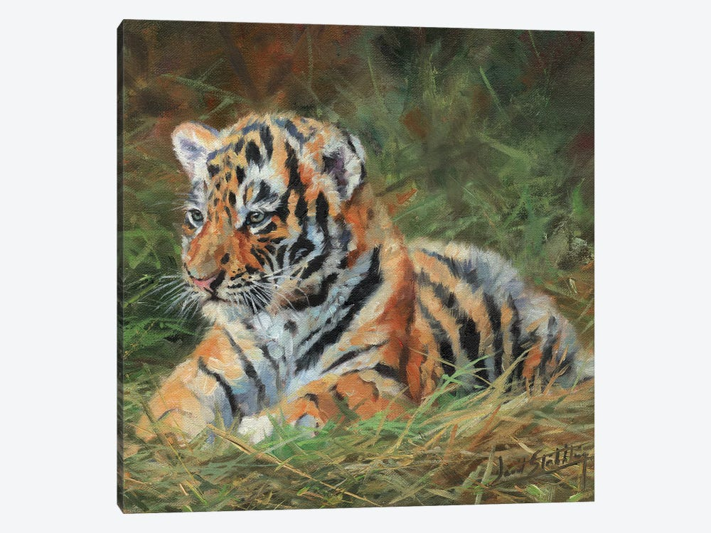 Tiger Cub Laying Down In Grass by David Stribbling 1-piece Canvas Wall Art
