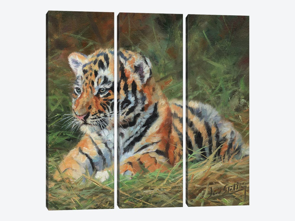Tiger Cub Laying Down In Grass by David Stribbling 3-piece Canvas Artwork