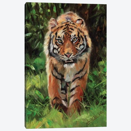 Tiger Prowl Canvas Print #STG213} by David Stribbling Canvas Wall Art