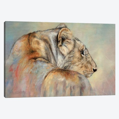 Lady In Waiting (Lioness) Canvas Print #STG214} by David Stribbling Art Print