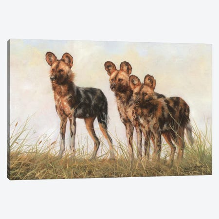 3 African Wild Dogs Canvas Print #STG215} by David Stribbling Canvas Art Print