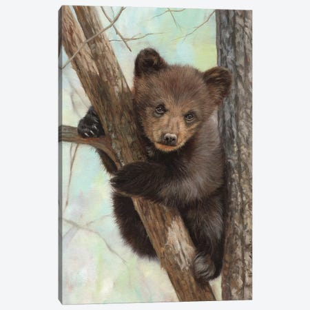 Brown Bear Cub In Tree Canvas Print #STG217} by David Stribbling Canvas Print