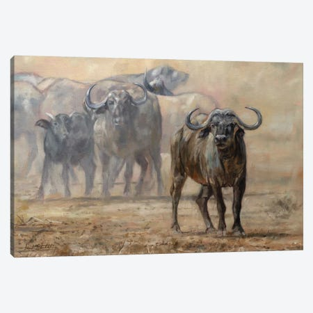 Buffalo Zambia Canvas Print #STG218} by David Stribbling Canvas Wall Art