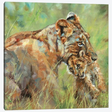Lioness And Cub Canvas Print #STG219} by David Stribbling Canvas Artwork