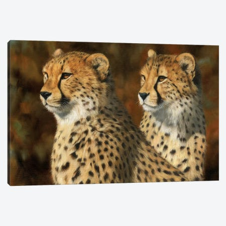 Cheetah Brothers Canvas Print #STG21} by David Stribbling Canvas Wall Art