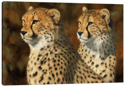 Cheetah Brothers by David Stribbling Canvas Art Print