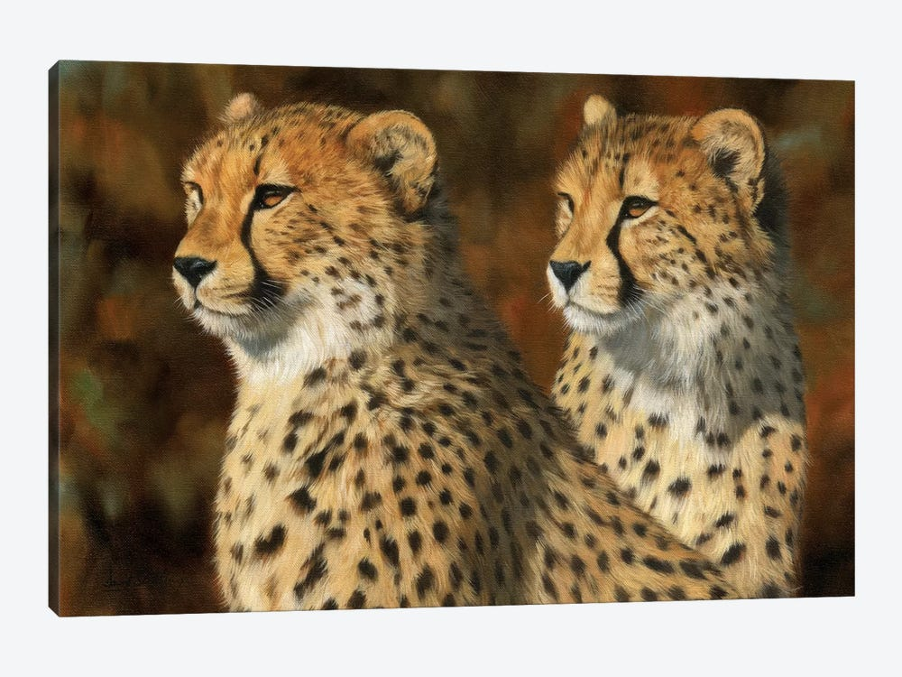 Cheetah Brothers by David Stribbling 1-piece Canvas Artwork