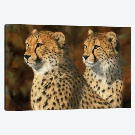 Cheetah Brothers Canvas Print #STG21} by David Stribbling Canvas Wall Art
