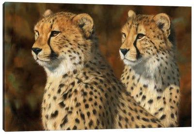 Cheetah Brothers Canvas Art Print