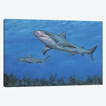 Reef Shark Canvas Print #STG220} by David Stribbling Canvas Art Print