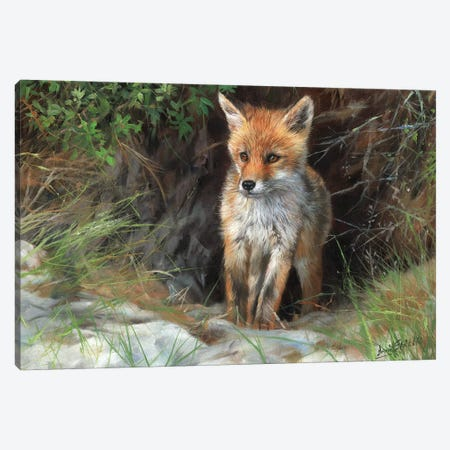 Young Red Fox Canvas Print #STG222} by David Stribbling Canvas Print