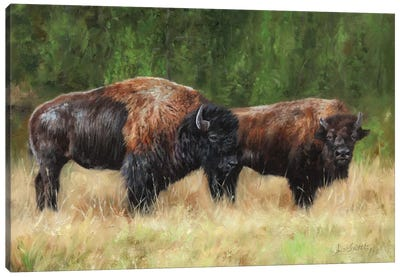 Pair Of Bison by David Stribbling Canvas Art Print