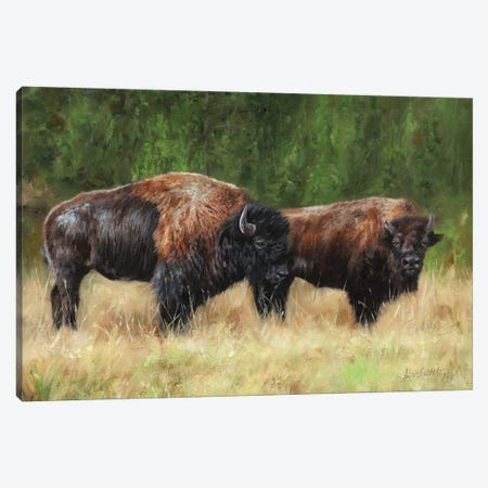 Pair Of Bison 3-Piece Canvas #STG223} by David Stribbling Canvas Art Print