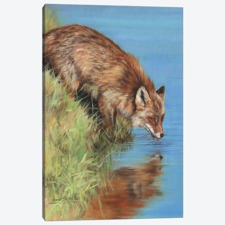 Fox Drinking At River Canvas Print #STG224} by David Stribbling Canvas Wall Art