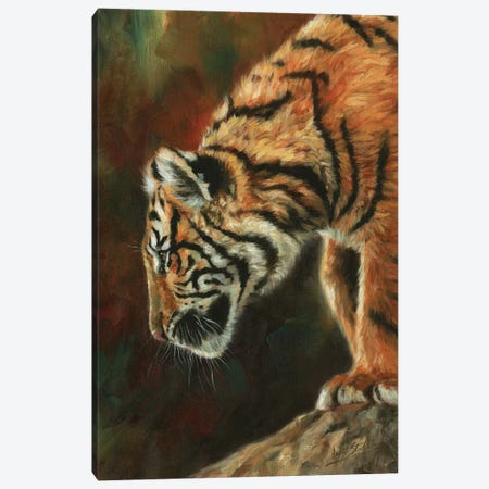 Inquisitive Young Tiger Canvas Print #STG225} by David Stribbling Canvas Artwork