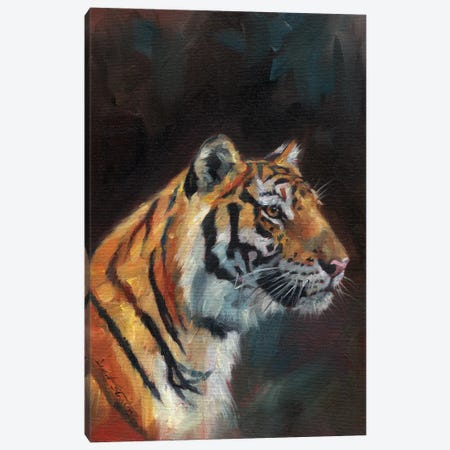Portrait Of A Tiger Canvas Print #STG226} by David Stribbling Canvas Art