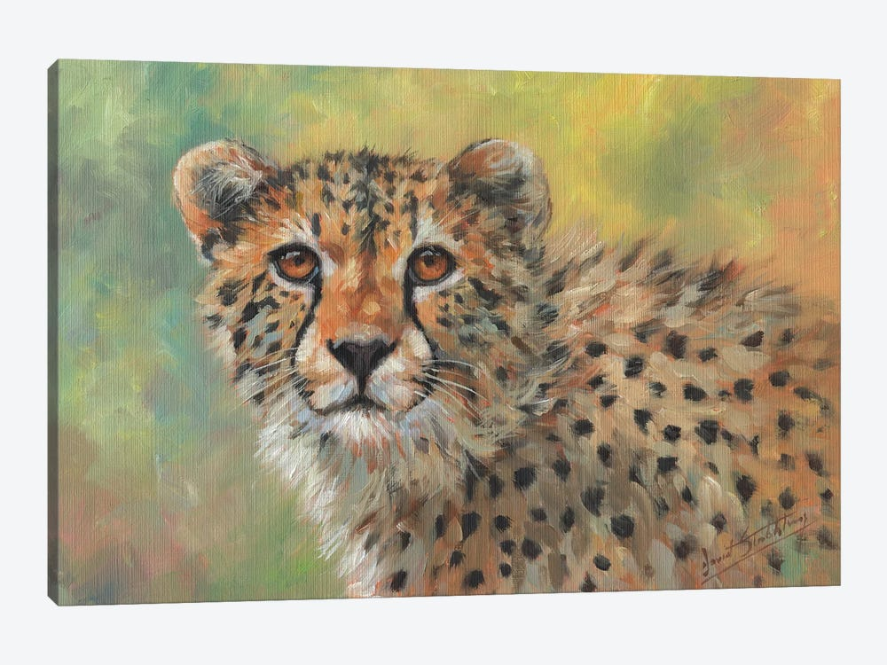 Portrait Of A Cheetah by David Stribbling 1-piece Canvas Print