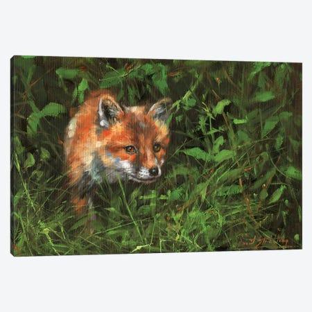 Red Fox Study In Oil Canvas Print #STG228} by David Stribbling Art Print